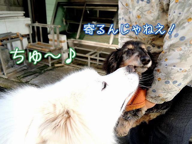 ♪ 東京モフモフボーイ ♪_c0062832_792328.jpg