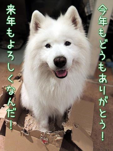 ♪ 東京モフモフボーイ ♪_c0062832_794278.jpg