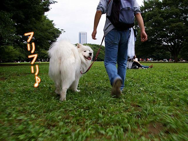 ♪ 東京モフモフボーイ ♪_c0062832_79876.jpg