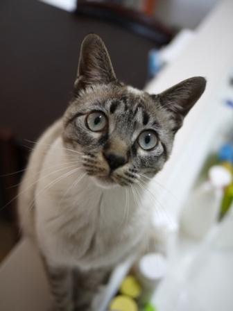 猫のお友だち カン太くんルノーちゃん編。_a0143140_23374178.jpg