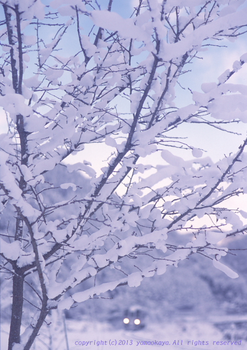 木々の雪花_d0309612_1361029.jpg