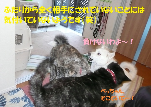 f0121712_134790.jpg