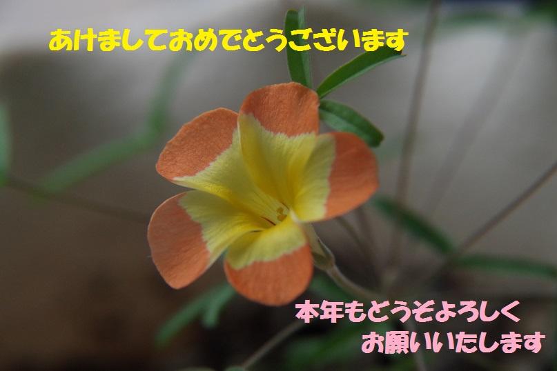 f0236744_1225113.jpg