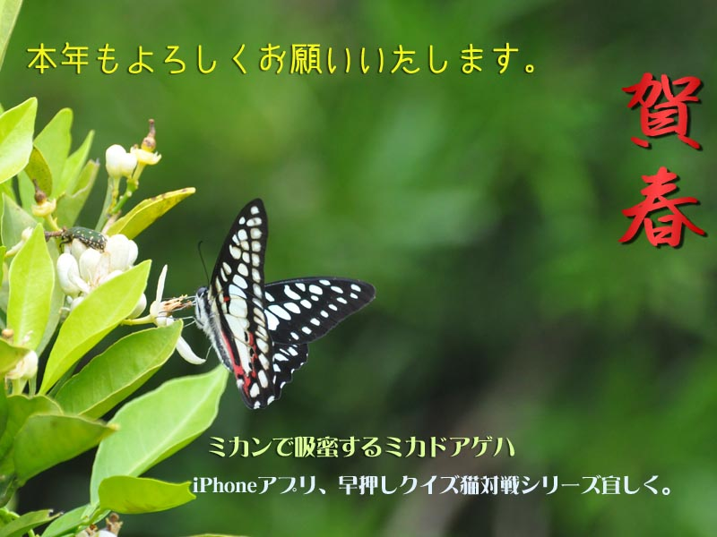c0045352_0245022.jpg