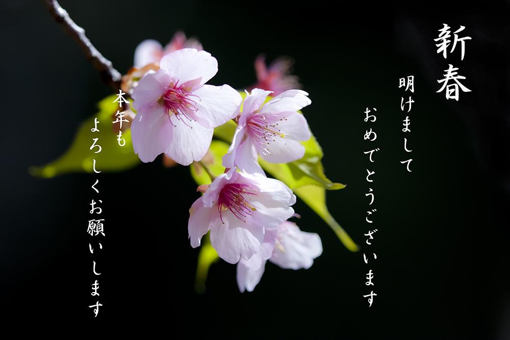 f0195893_035533.jpg