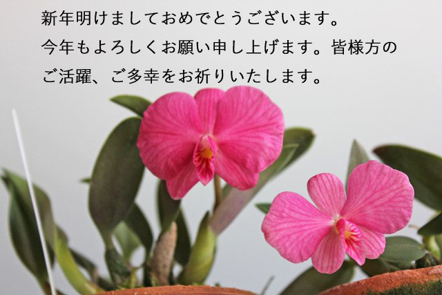 d0007501_8351761.jpg