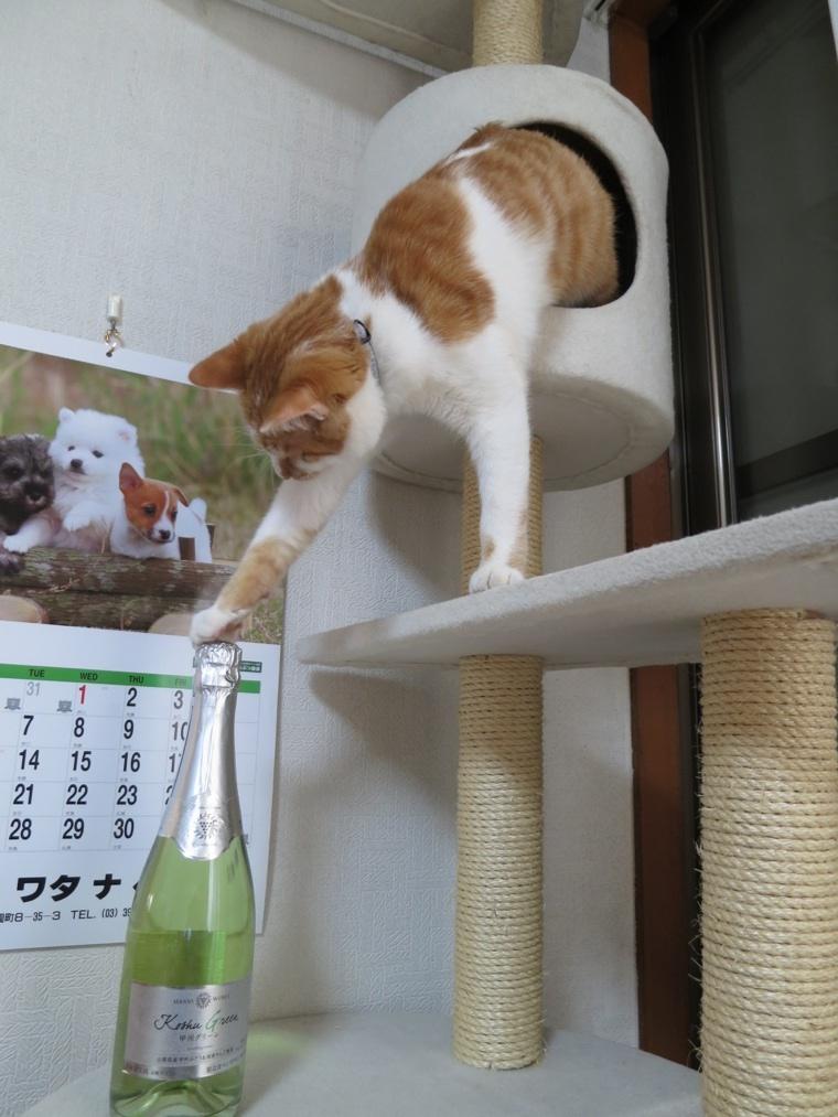 【猫】もうちょっと。。_f0141609_18583414.jpg