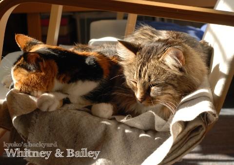 WhitneyとBaileyからの、お年玉ショット_b0253205_427138.jpg