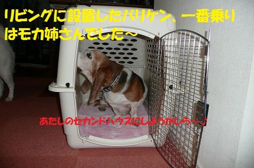 f0121712_1621851.jpg