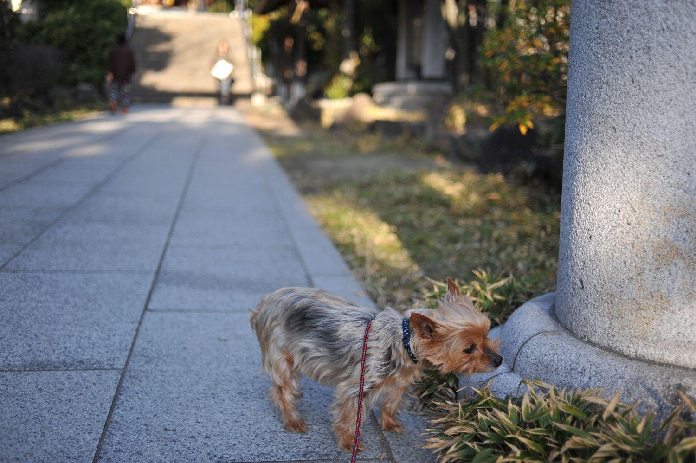 コムギと初詣_b0069128_194836.jpg