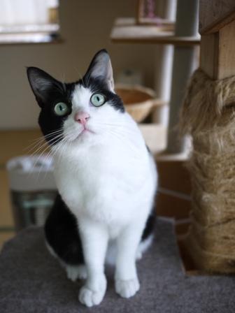 猫のお友だち ビンゴくん編。_a0143140_22201042.jpg
