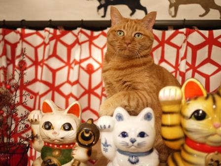 招き猫 しぇる編。_a0143140_23521522.jpg