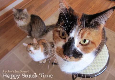 オヤツの時間 / パンを盗み食いした猫たち_b0253205_426539.jpg