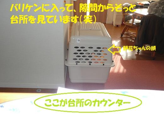 f0121712_15301342.jpg