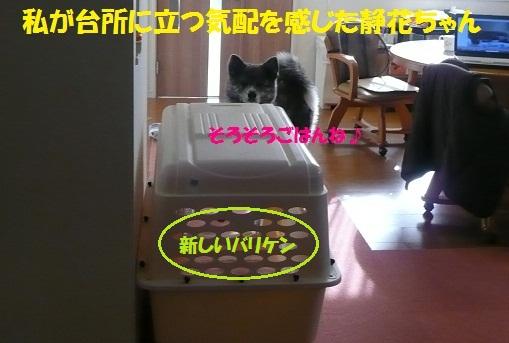 f0121712_153076.jpg
