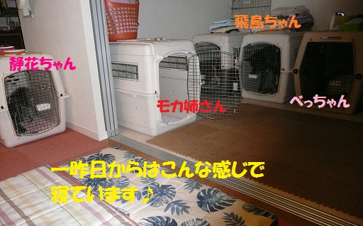 f0121712_1559223.jpg