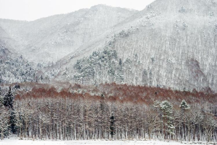 山の夢_d0265224_23125641.jpg