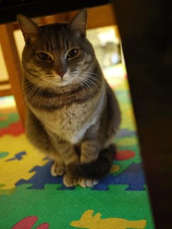 猫のお友だち オリーブちゃんキティちゃんタマくんなおくん + 犬のお友だち ミニーちゃん編。_a0143140_22171144.jpg