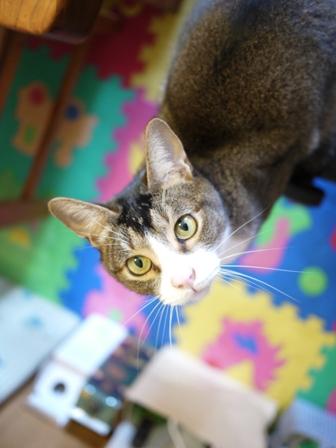 猫のお友だち オリーブちゃんキティちゃんタマくんなおくん + 犬のお友だち ミニーちゃん編。_a0143140_22173812.jpg