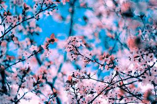 頌春(と、ブログに対する思い)_c0060659_1035141.jpg