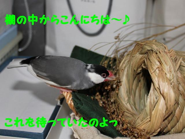 b0158061_2015522.jpg