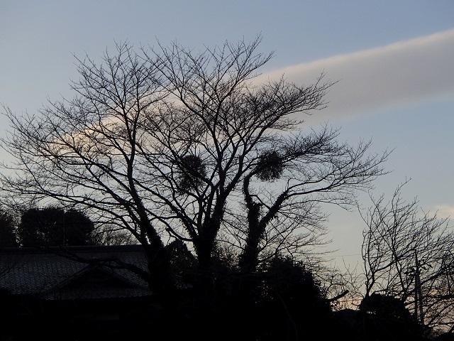 不思議な雲 1月3日  残念だけど期待する気持ち_d0105967_16503232.jpg