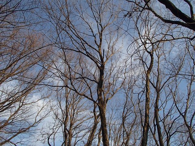 不思議な雲 1月3日  残念だけど期待する気持ち_d0105967_16545287.jpg