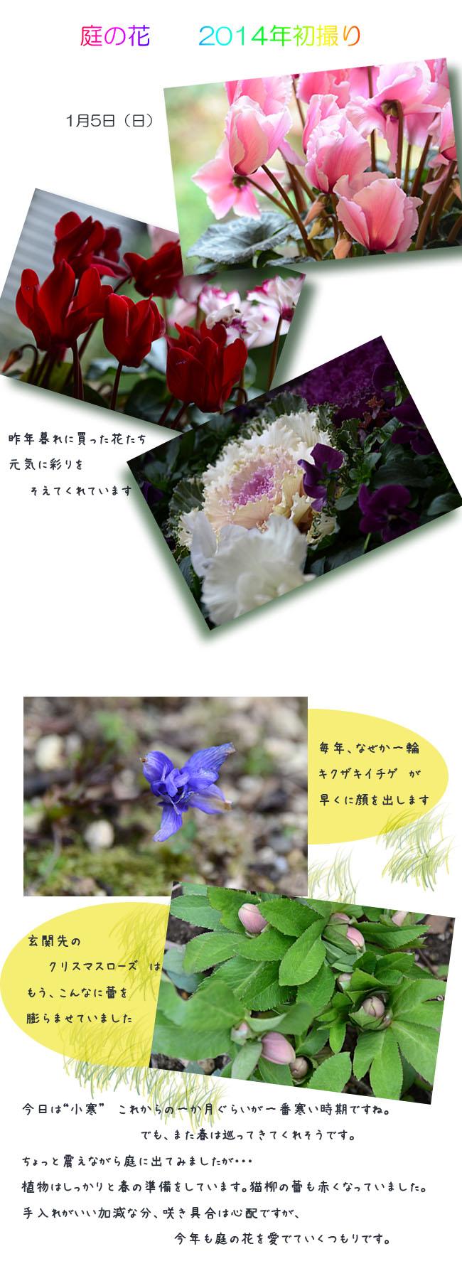 e0020954_156636.jpg