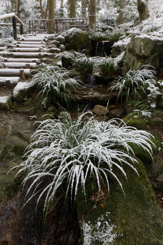 雪景色 2013 <大原 三千院>             _f0021869_22223159.jpg