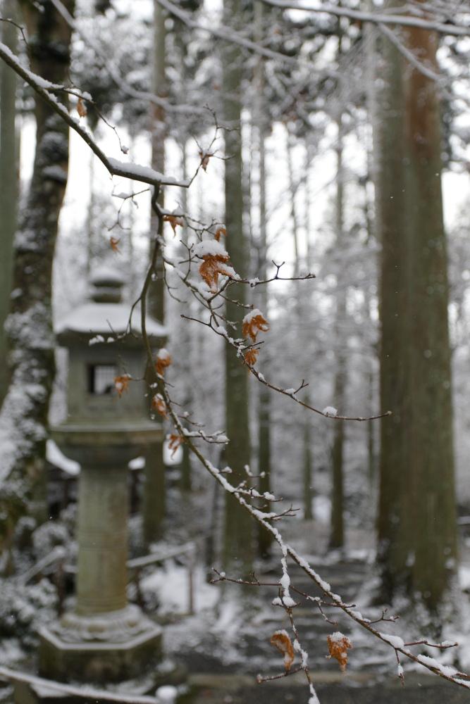 雪景色 2013 <大原 三千院>             _f0021869_22225564.jpg