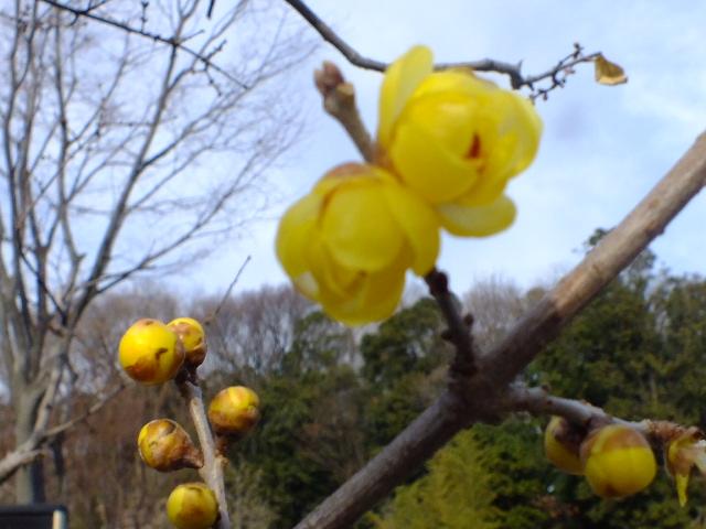 1月4日 東高根森林公園_e0145782_1650330.jpg