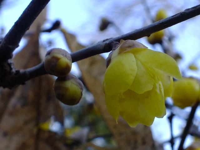1月4日 東高根森林公園_e0145782_16503876.jpg