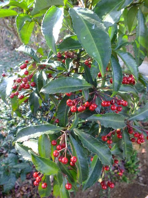 1月4日 東高根森林公園_e0145782_16512549.jpg