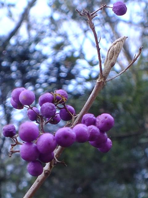 1月4日 東高根森林公園_e0145782_1655699.jpg