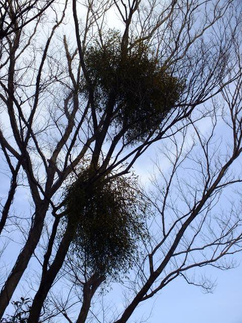 1月4日 東高根森林公園_e0145782_16562922.jpg