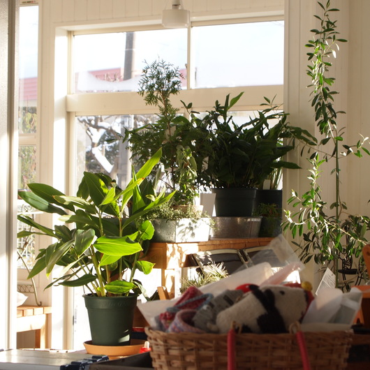 sola og planta 2014年1月の営業について_a0292194_2381217.jpg