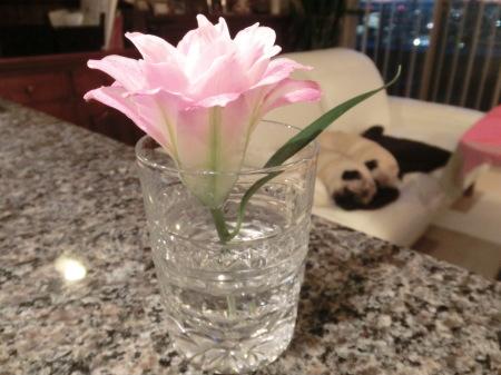 花よりパグs ゆり明日香_b0190666_22040537.jpg