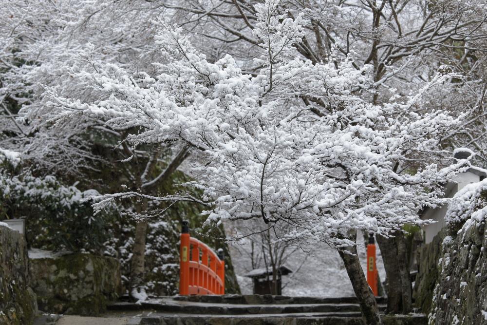 雪景色 2013 <大原>             _f0021869_21554968.jpg