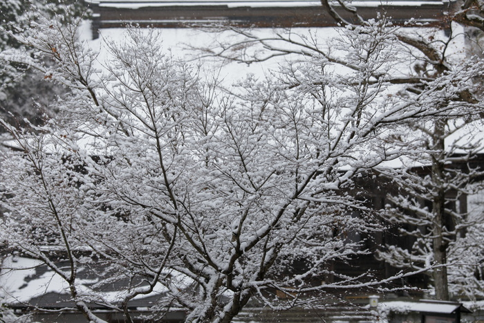 雪景色 2013 <大原>             _f0021869_21563276.jpg
