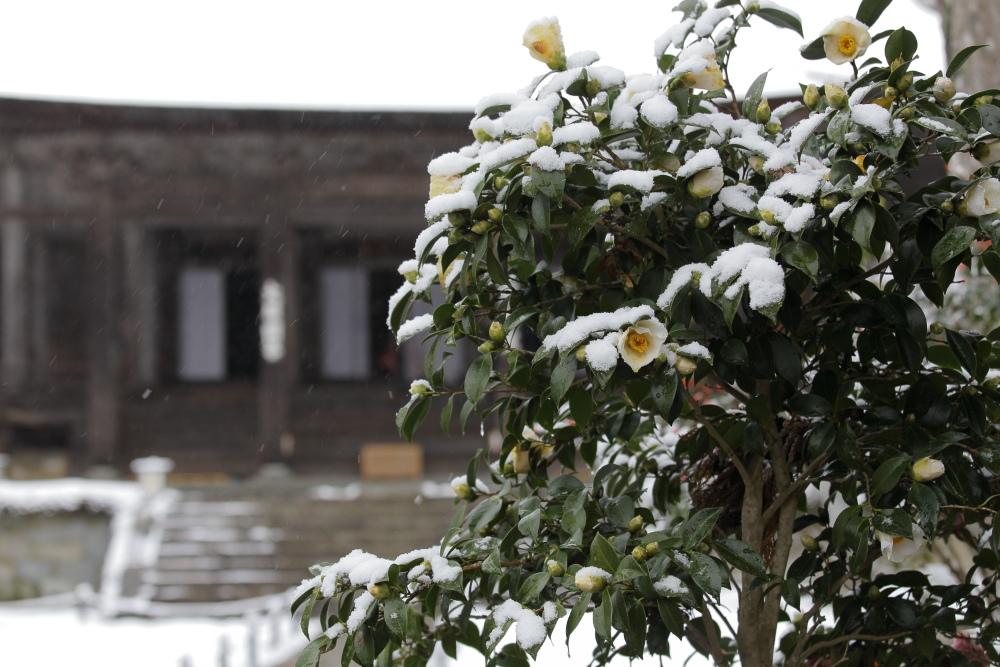 雪景色 2013 <大原>             _f0021869_2156452.jpg