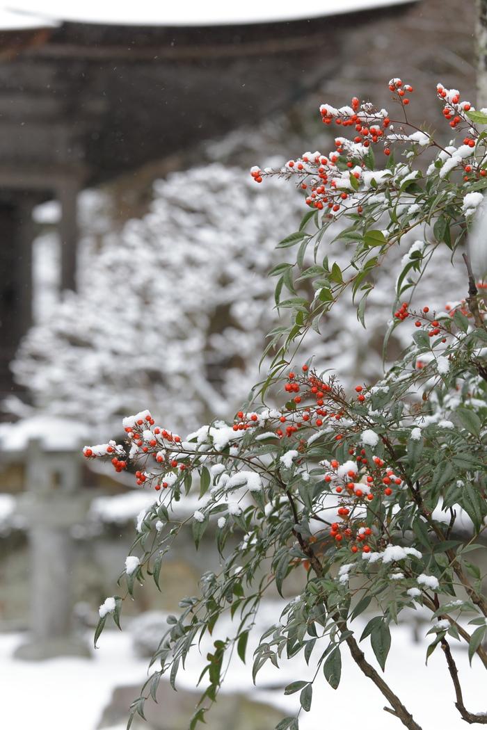 雪景色 2013 <大原>             _f0021869_21572069.jpg