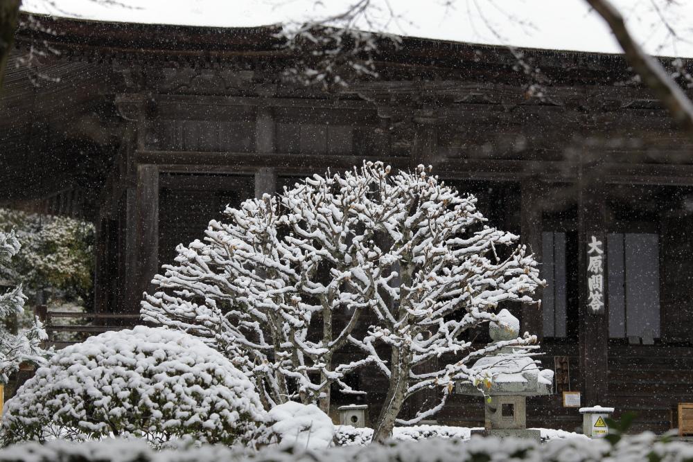 雪景色 2013 <大原>             _f0021869_21575068.jpg