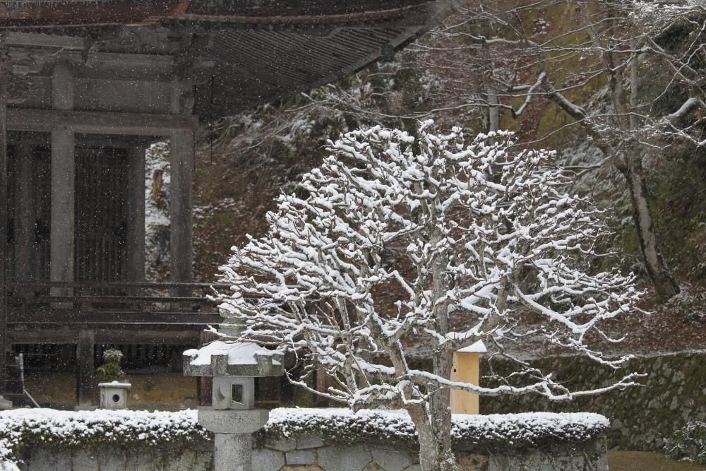 雪景色 2013 <大原>             _f0021869_215767.jpg
