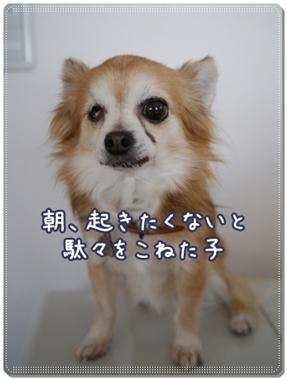 b0138506_15312135.jpg