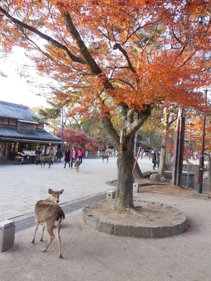 約15年ぶりに東大寺へ。_d0116009_1019547.jpg