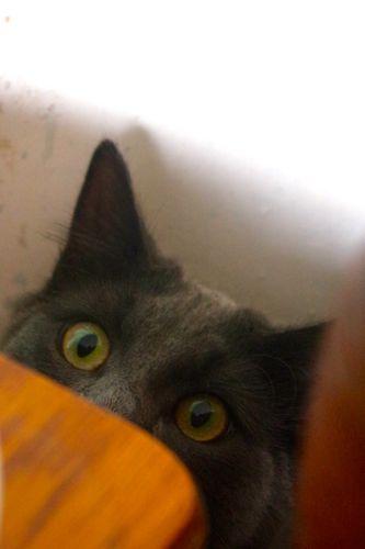 猫のルナとジュニベリー_e0114020_5493692.jpg