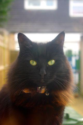 猫のルナとジュニベリー_e0114020_5532723.jpg
