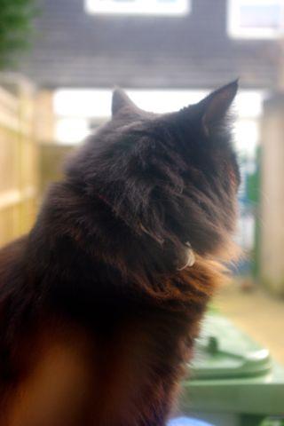 猫のルナとジュニベリー_e0114020_5535830.jpg