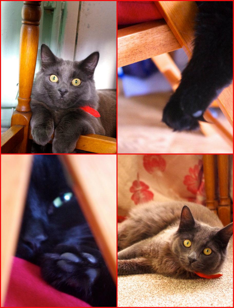 猫のルナとジュニベリー_e0114020_7511447.jpg