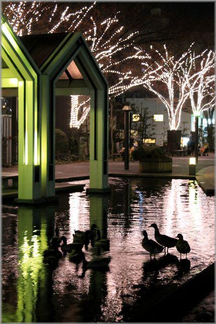「LEDに彩られる水都・徳島の風景」_d0133024_10364291.jpg